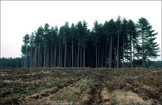 Rendlesham Matrix forestedge