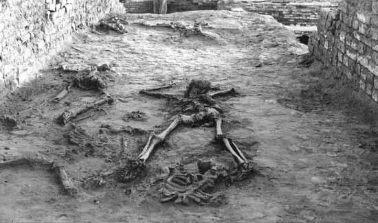 The Psychrophiles mohenjo skeletons