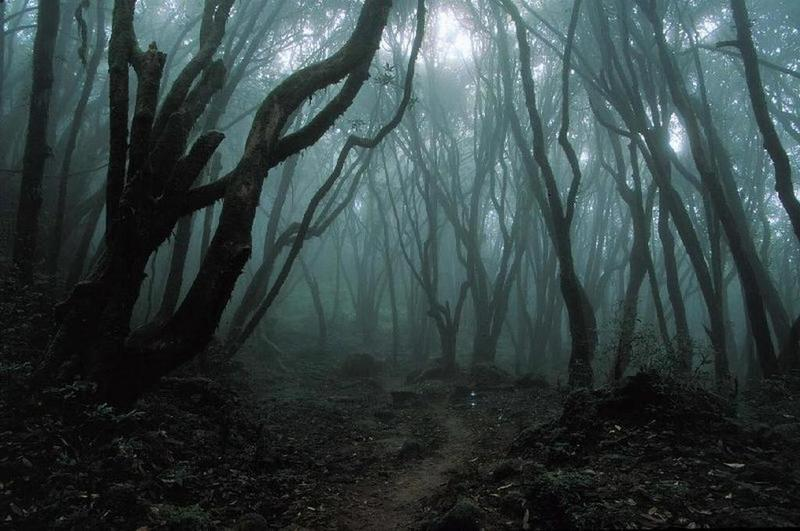 JFK Curious dark_forest