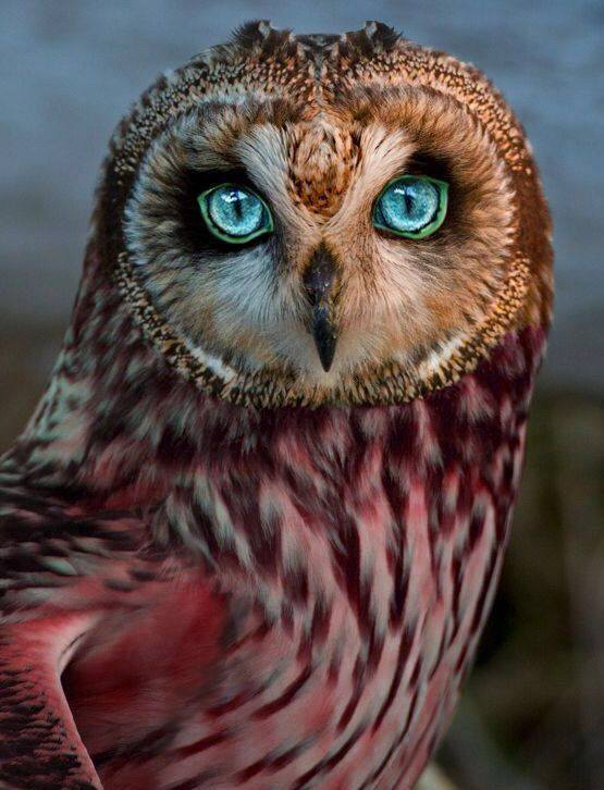 Photos Extra Blye eyed Owl ( httpswww.washingtonpost.comnationalhealth-sciencebrain-computer-interfaces-are-coming-consensual-telepathy-anyone201706099345c682-46ef-11e7-98cd-af64b4fe 205