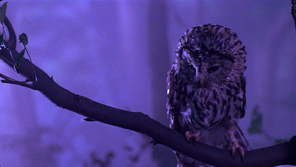 Photos Extra Purple Owl ( httpvintageninja.netp=741 ) 001