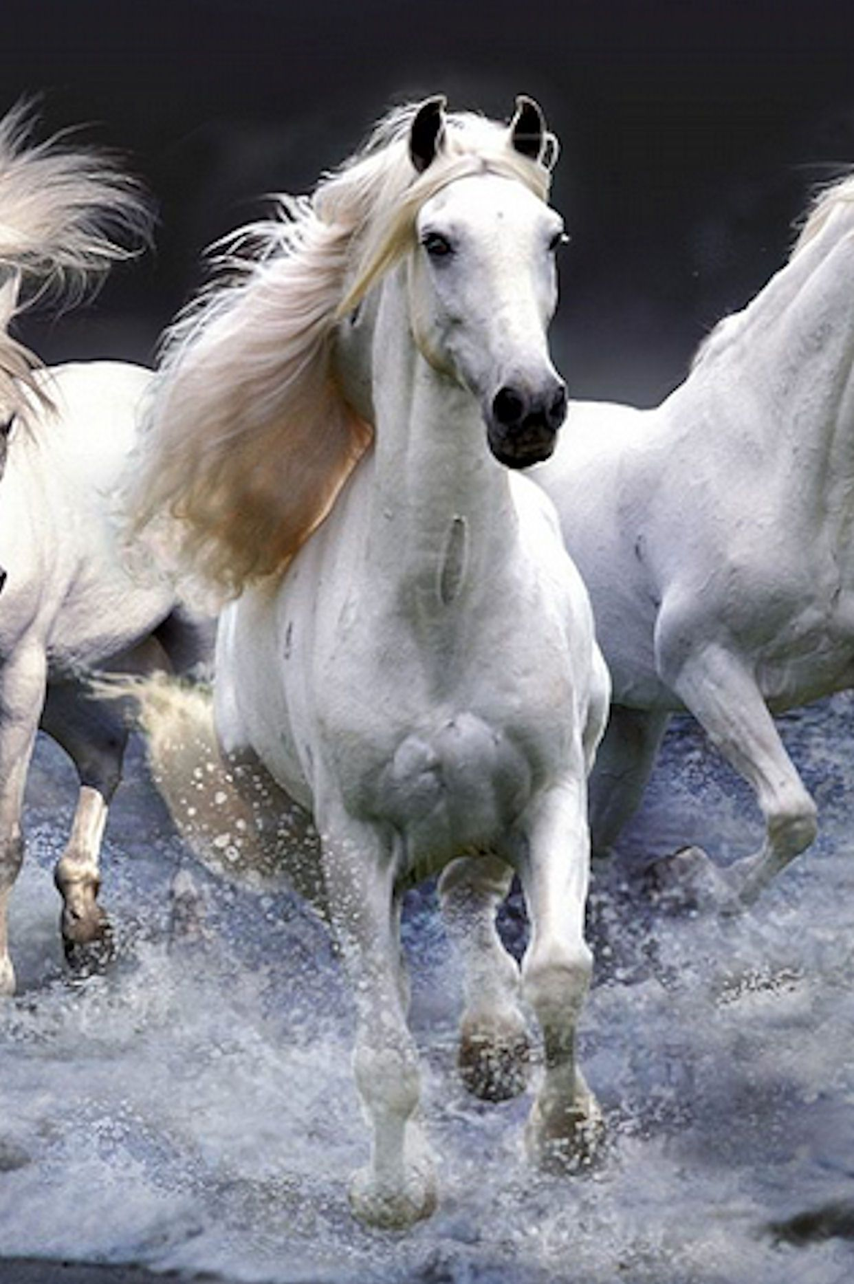 Photos Extra Whte Horse 3b416efc56fee5b317af61bc49f80644